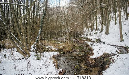 White winter forest