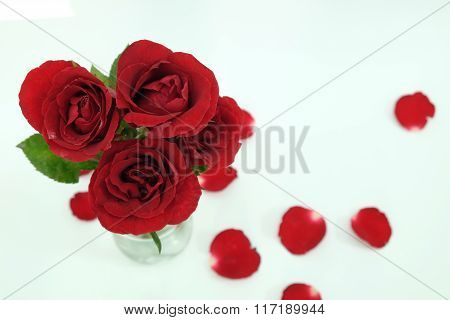 Red rosed on white background.