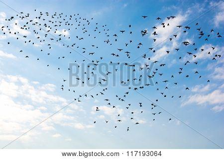 Flock Of Birds Forming Heart Shape