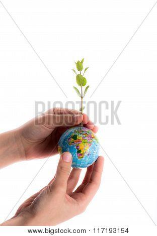 Hand Holding Tree On Globe