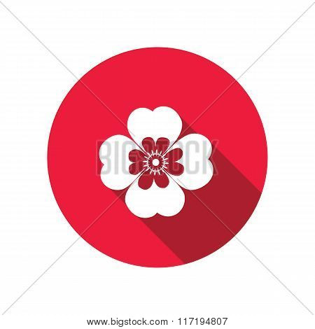 Chamomile, forget-me-not flower icons. Floral symbol. Round circle flat icon with long shadow. Vecto