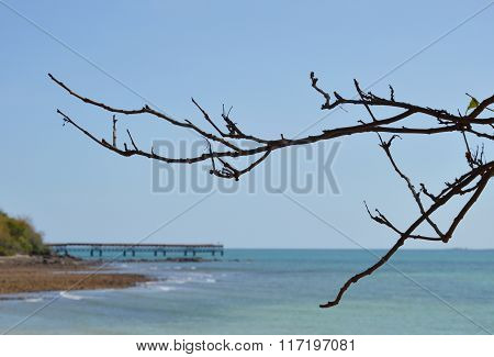 dry branch at beach and jetty background