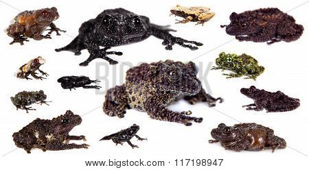 Mossy Frogs set on white