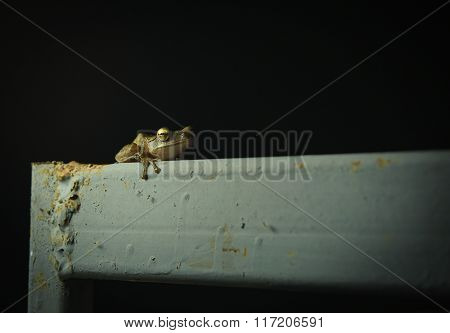 Tree Frog Sitting On Old Metal Garden Gate Using Lamp Light To Catch Insects
