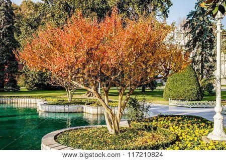 Autumn tree in Istanbul park.