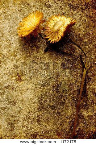 Grunge Flower Still Life - Yellow