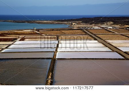 Pond Water Coastline Salt In  Lanzarote Spain Musk  Rock Stone