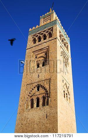 Maroc Africa Minaret And The Bird