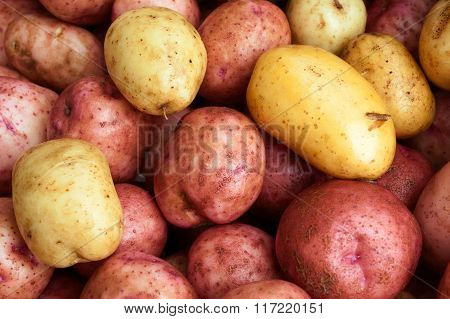 Clean And Washed Potatoes
