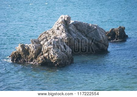 The reef in the Adriatic Sea