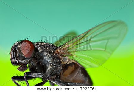 Fly on a colored background. Macro
