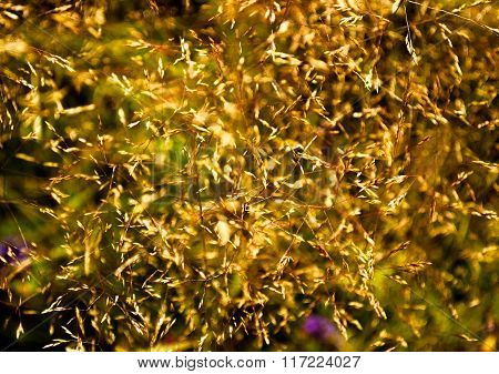 Chaotic Yellow Grass Summer Abstract Background