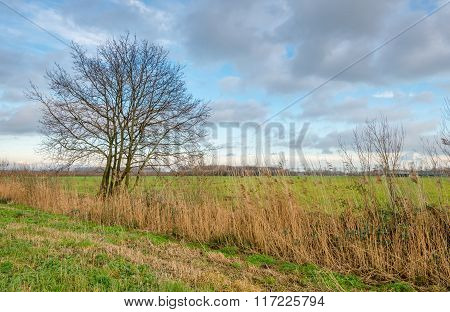 Lone Bare Tree In A Rural Area In The Fall Season