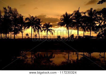 Tropic Pulms On The Sunset, Sky Background