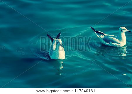 Seagull On Seawater And The Way Of Life From Nature