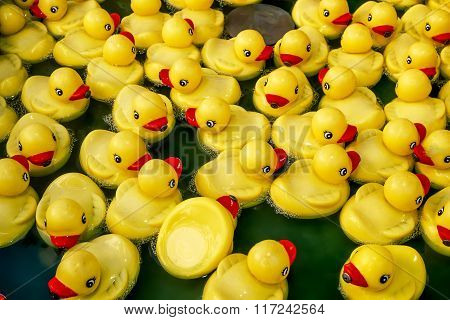 View Of The Yellow Plastic Ducks In The Pool