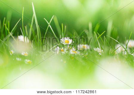 Green grass texture background, close-up.