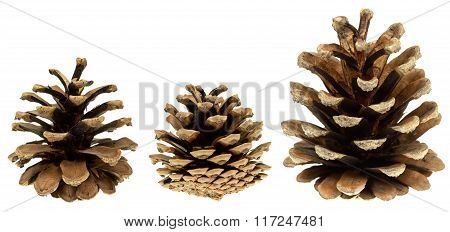 Set of cones coniferous trees isolated on white