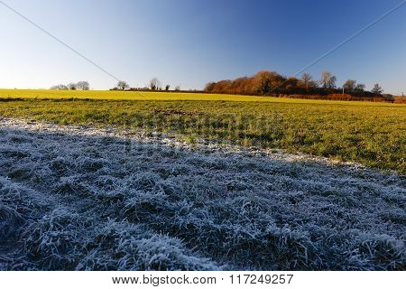Winter Frosty Grass Landscape With Vibrant Blue Sky