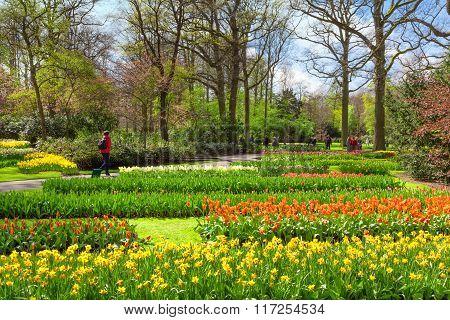 Beautiful spring flowers in Keukenhof Gardens, Netherlands.