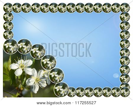 Spring Blossom To Cherries On Turn Blue Background