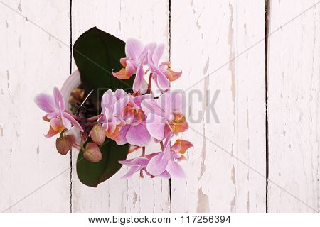 Orchids In Pot, Top View On White Wooden Planks