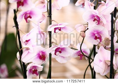 Orchids Flowers