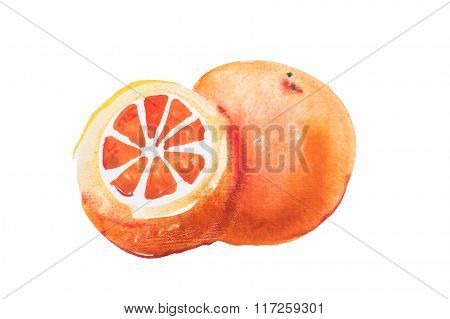 Orange watercolor aquarelle hand drawn on white background