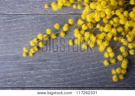 Fresh mimosa flower on table