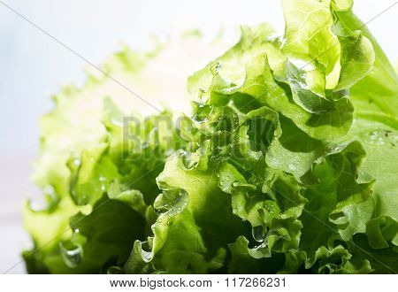 Brightly Lit Green Lettuce Leaves With Water Drops