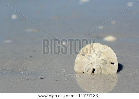 Sand Dollar In The Ocean Shore At Beach