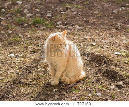 Stray cats or street