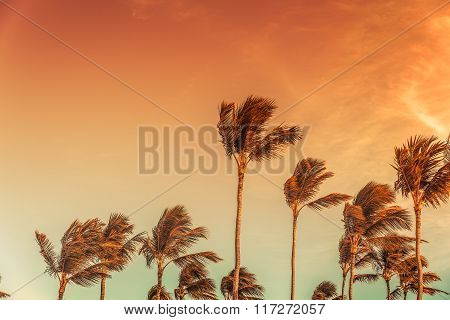 Palm's tops with the sky behind