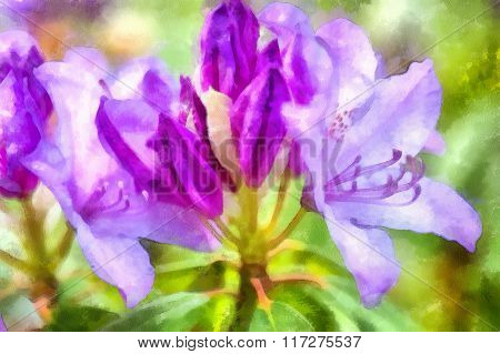 purple flowers of rhododendron