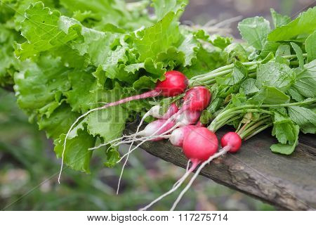 Radishes in a dish