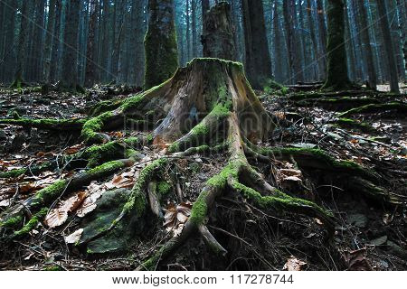 Mystic Stump At The Wood