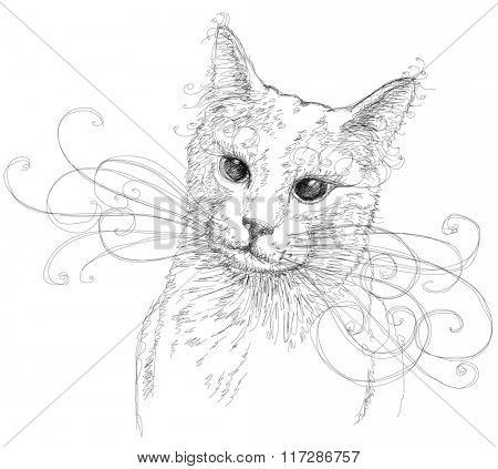 Portrait of attractive cat. Linear black and white illustration