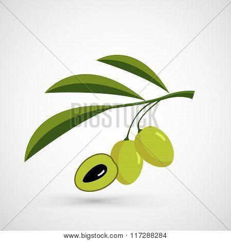 Olive oil.Vector decorative olive branch