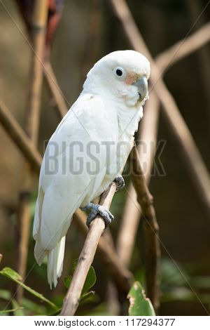 White parrot siting on the tree branch