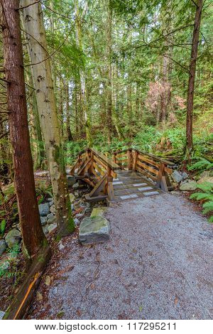 Fragment of gorgeous trail in West Vancouver Park, Canada.