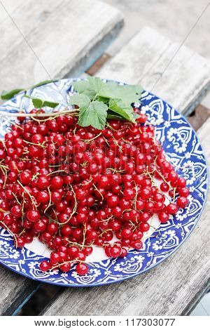 currants organic red currants on the plate