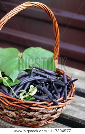 Blue beans in a large basket