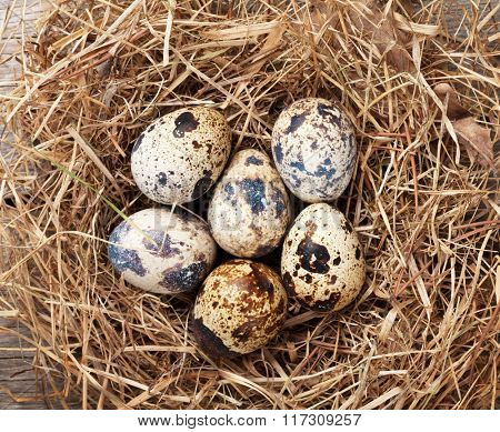 Quails eggs in nest on rustic wooden background