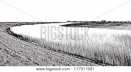 Reed along dike and lake