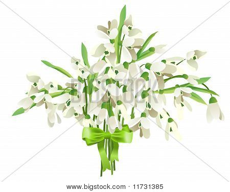 Snowdrop bunch