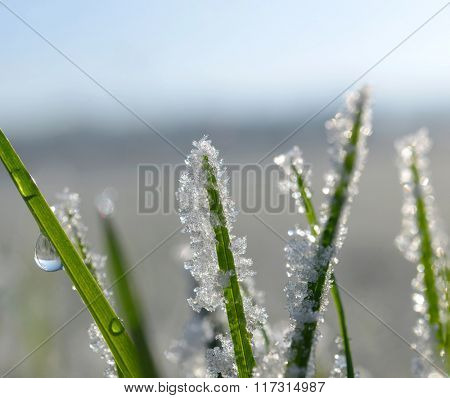 Frozen grass close up. Nature background.
