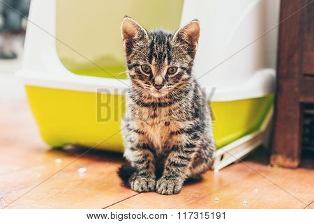 Pretty Adorable Little Grey Striped Tabby Kitty
