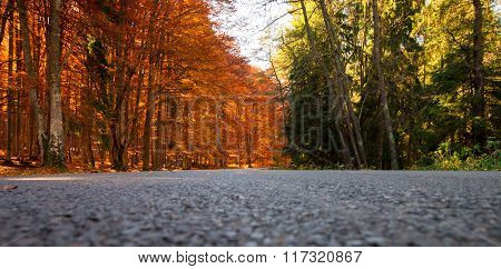 Orange And Green Forest_low