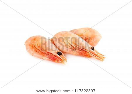 Fresh Boiled Shrimps Isolated On A White