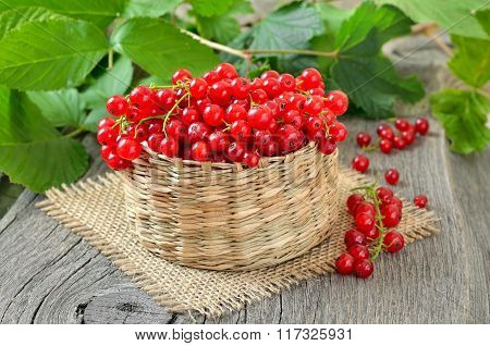 Red Currants In Wicker Basket